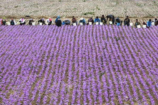 80 درصد اقتصاد تربت حیدریه وابسته به حوزه کشاورزی است