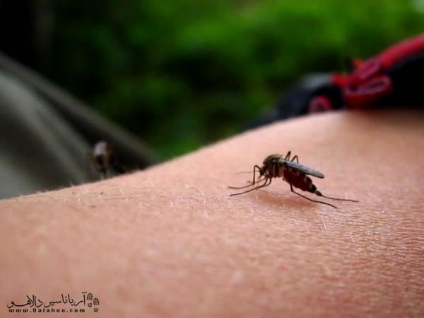 جلوگیری از نیش پشه در طبیعت